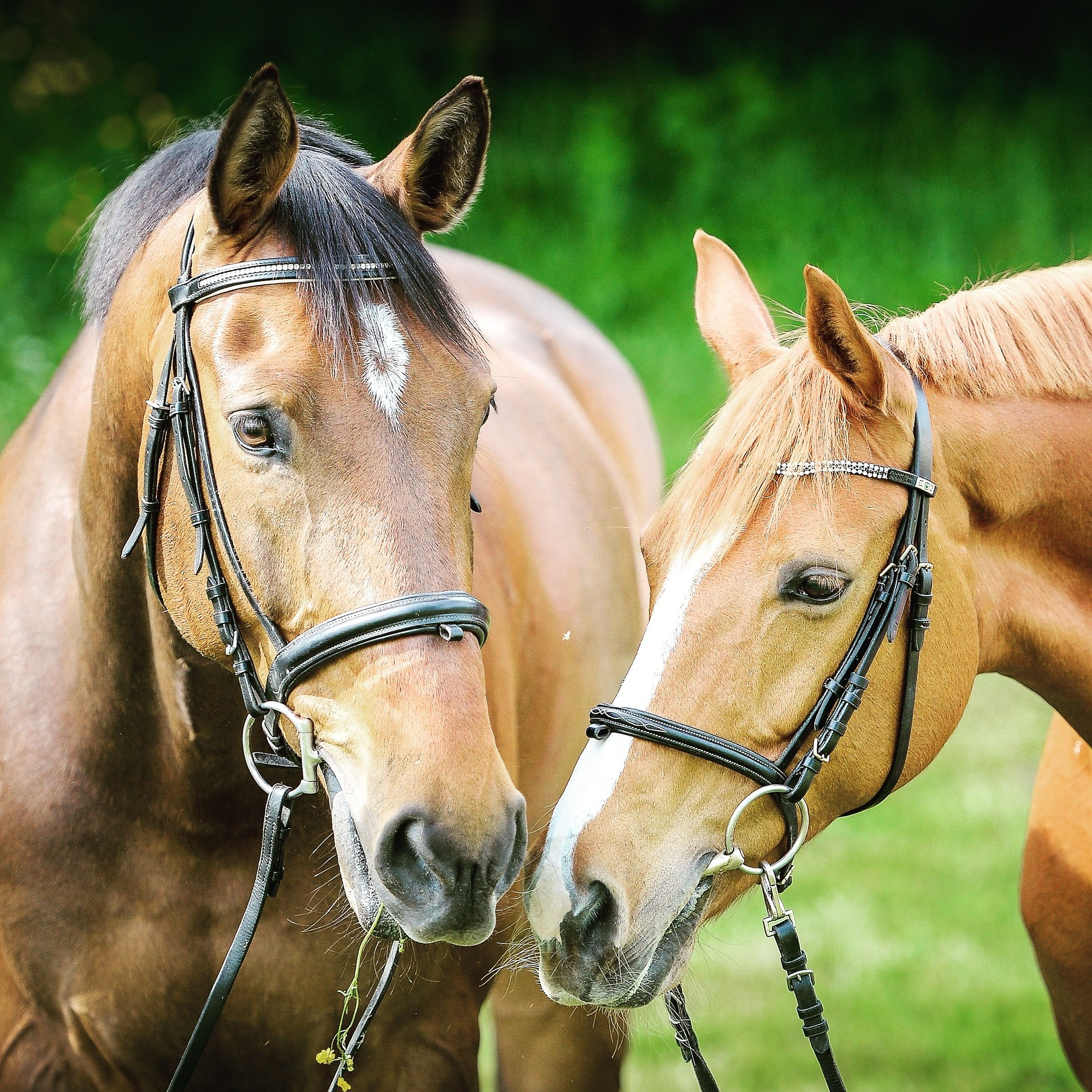 caballo-teniendo-sexo-con-mujere-indian-hardcore-sex-photos