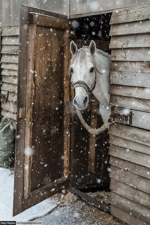 invierno, caballo, montar en invierno, cuidar al caballo en invierno