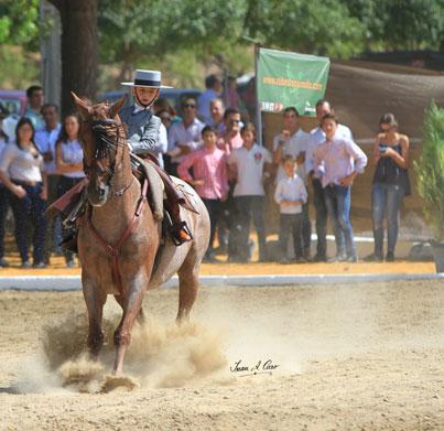 Oro en Alevines Luis Cordero Linares con Pitingo en el Campeonato de Andalucía de Doma Vaquera 2015