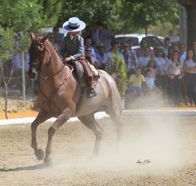 Oro en Alevines Luis Cordero Linares con Pitingo en el Campeonato de España de Doma Vaquera 2015