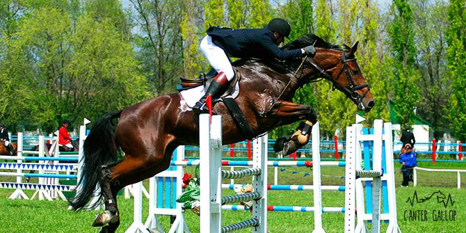 caballo saltando